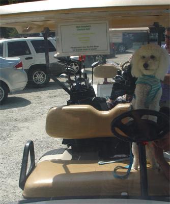 austen golf driving