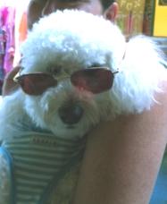 Austen sun glasses