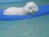 Austen in pool