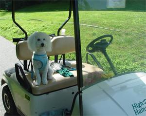 austen golf cart