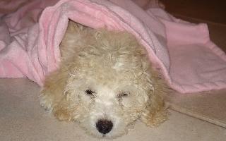 Austen Pink Blanket